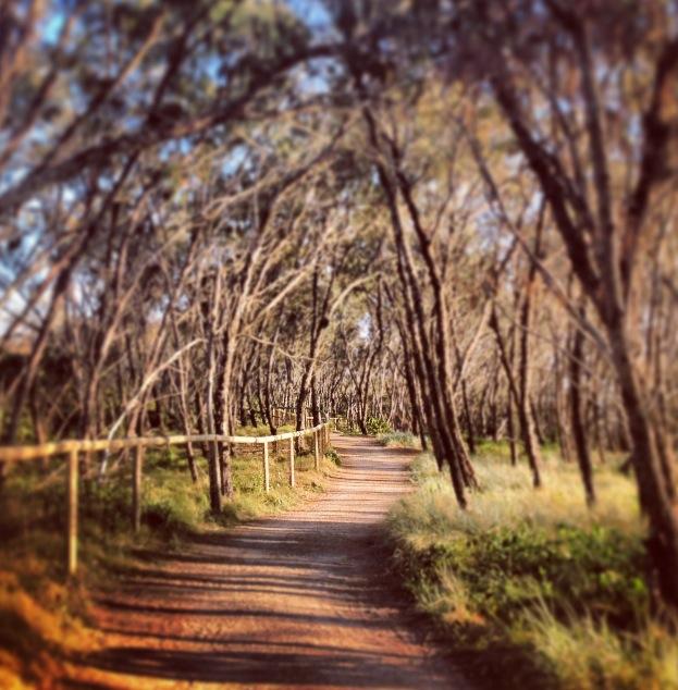 Casuarina Forest