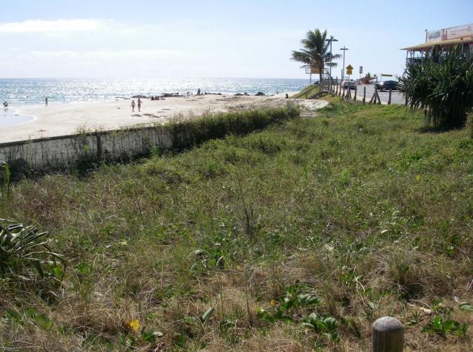Rainbow Bay's dunes half way through restoration.