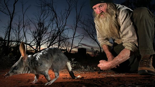 Dr Peter McRae releasing a bilby into a special fenced bilby protection zone in the Currawinya National Park at Hungerford. Source: News Limited