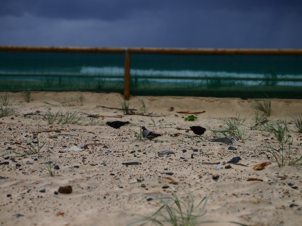 Fairy wrens were once the favoursite along 23rd-25th Ave. Penguins were the only 'wildlife' I saw on inspection in December 2014.
